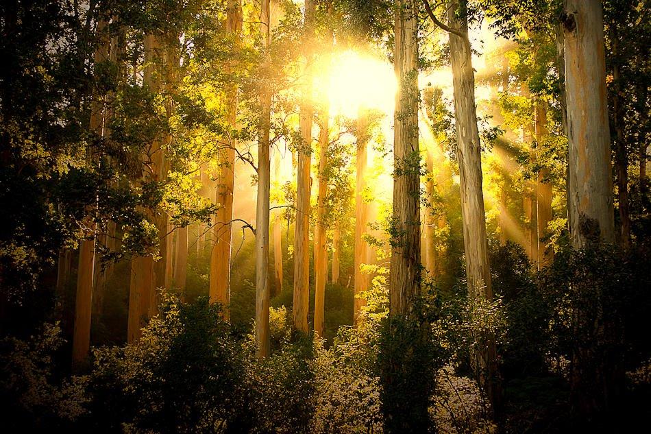 Bosque Encantado (Mario Moreno)