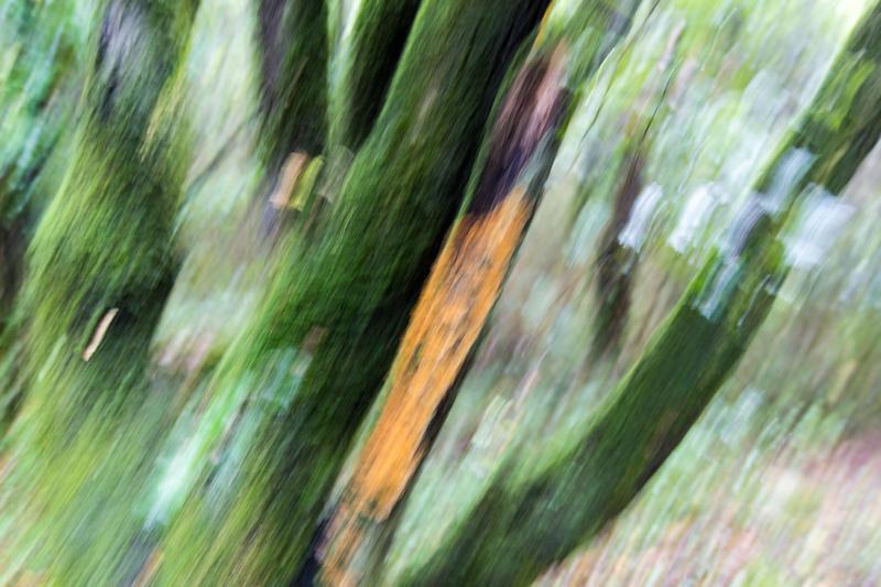 bosque encantado (Jose Luis Rubio Perez)