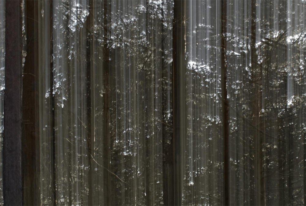 Bosque fantasma (II) (Salvador Solé Soriano)