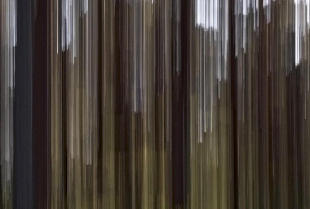 Bosque fantasma (III) (Salvador Solé Soriano)