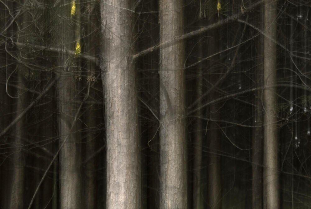 Bosque fantasma (IV) (Salvador Solé Soriano)
