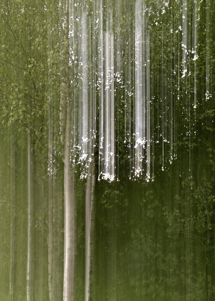 Bosque fantasma (V) (Salvador Solé Soriano)