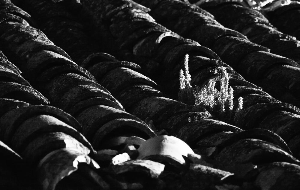 Brotes noche (Jose Luis Rubio Perez)