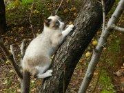 Buscando las ramas