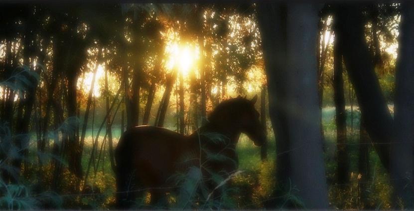Caballo en el bosque (leugim figueroa)