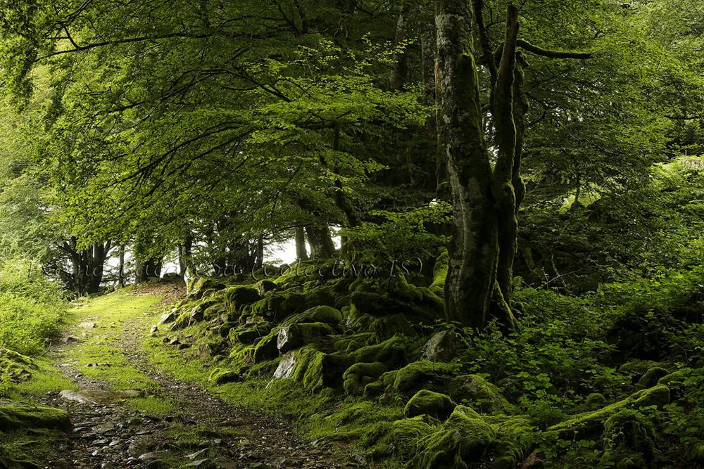 Caminando en verde (Txema Bacaicoa (Colectivo IS))