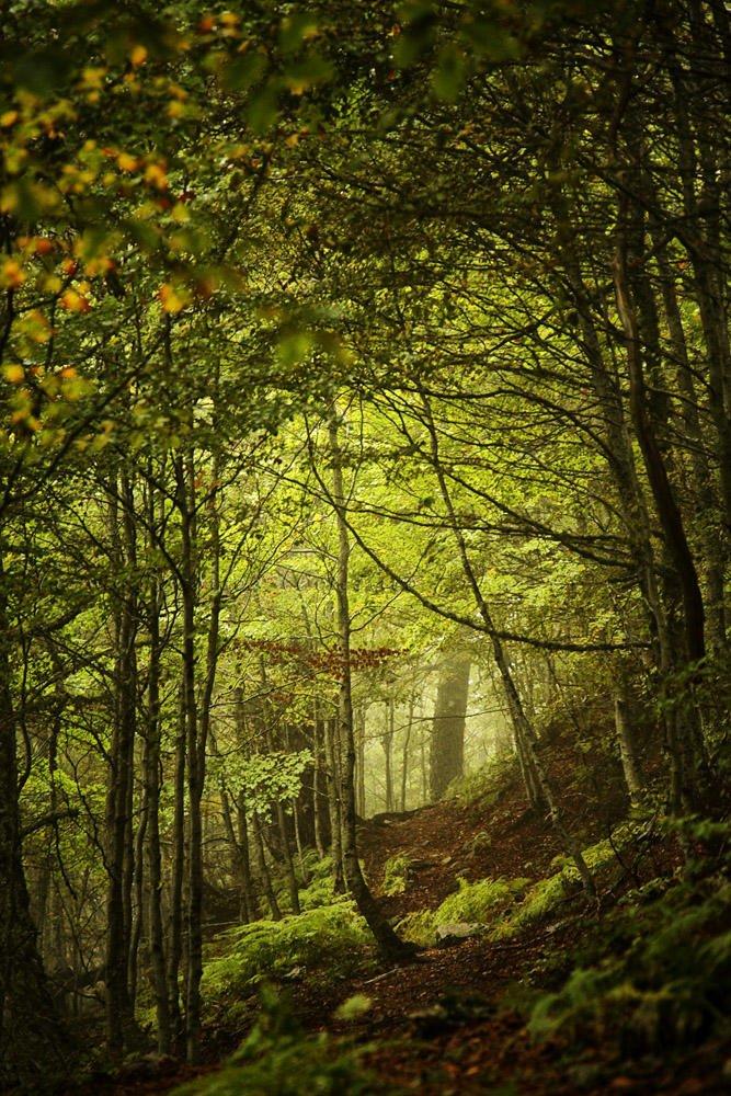 Caminar por senderos ocultos II (Txema Bacaicoa (Colectivo IS))