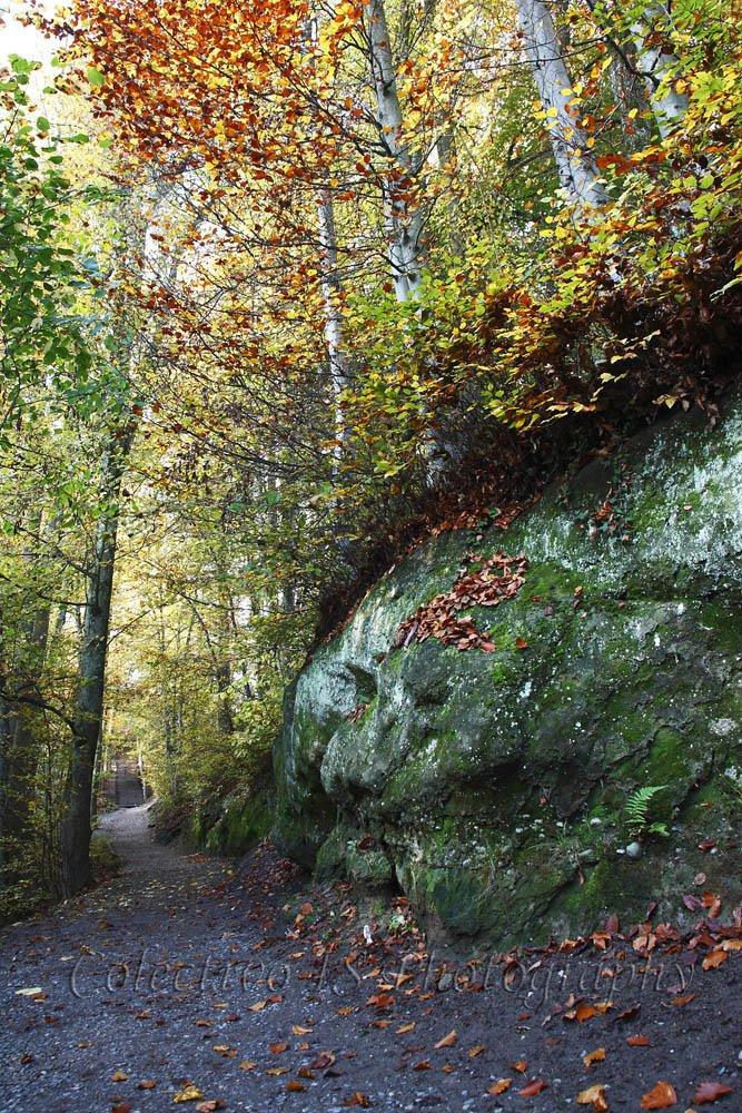 Camino de Gurten (Txema Bacaicoa (Colectivo IS))