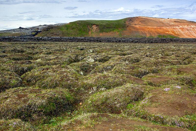 Campos de lava colonizados. Islandia 129 (david Pérez Hens)