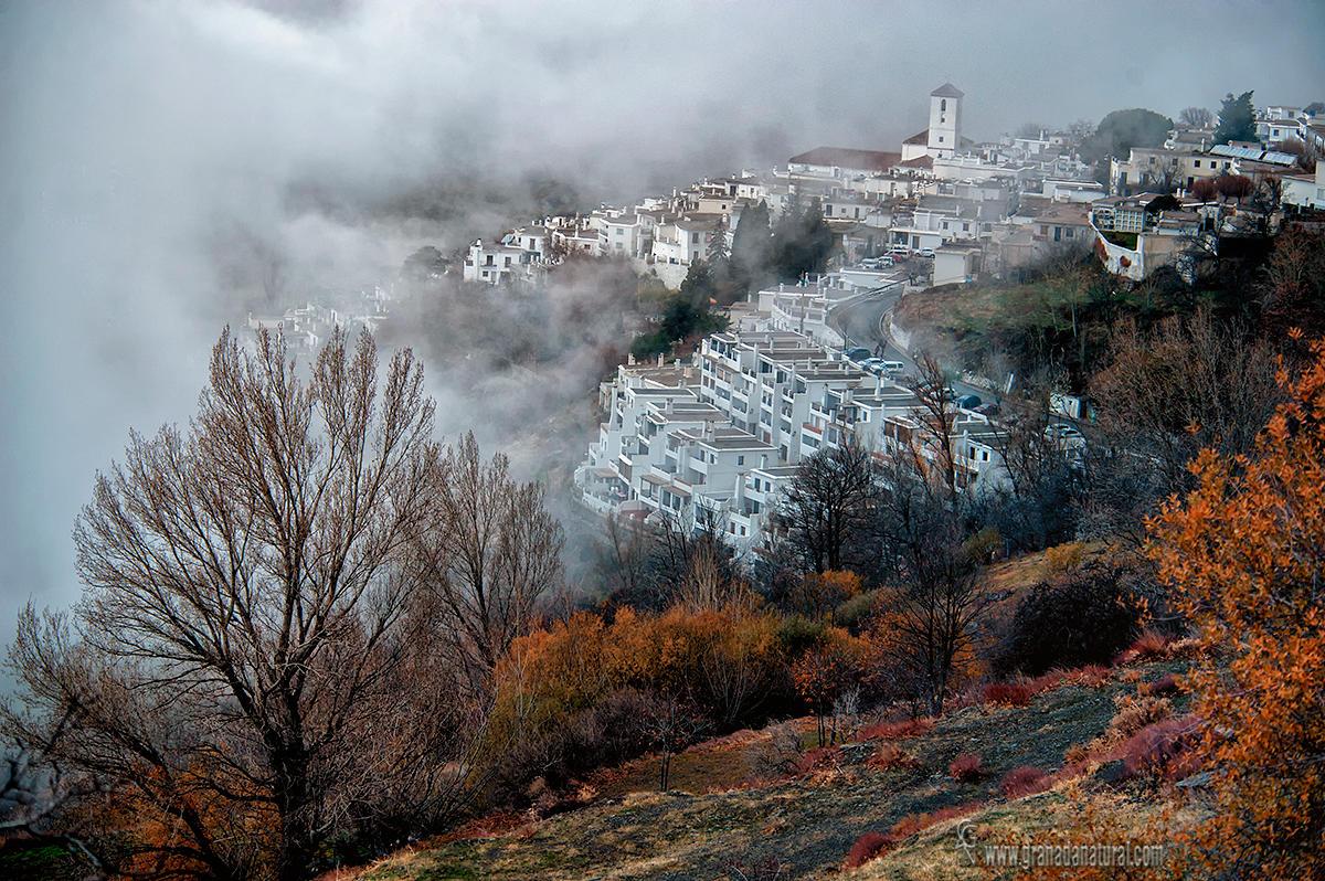 Capileria entre la niebla (Lucas Gutierrez Jiménez)
