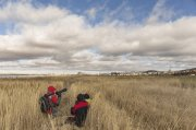 cazando grullas