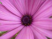 Central flor