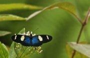 Composición con mariposa
