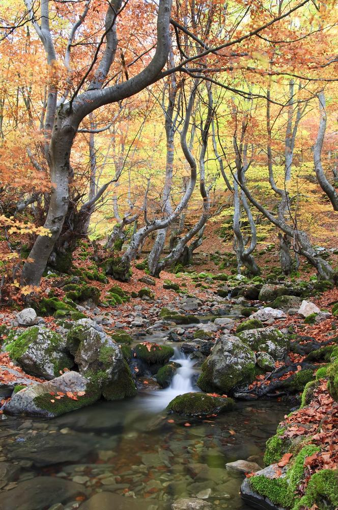 Con ganas de otoño. (Jesús Portal)