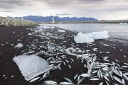 Cosas que pasan en Islandia 187