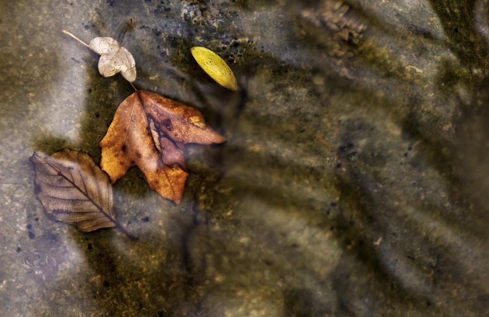 Cuatro hojas (Salvador Solé Soriano)