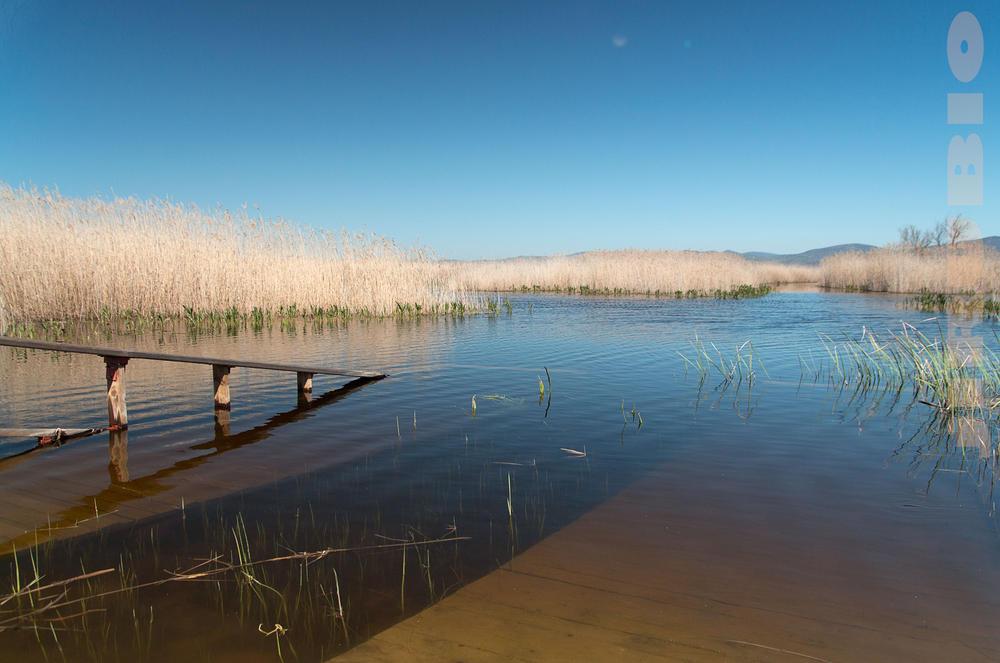 Daimiel inundado (Jose Luis Rubio Perez)
