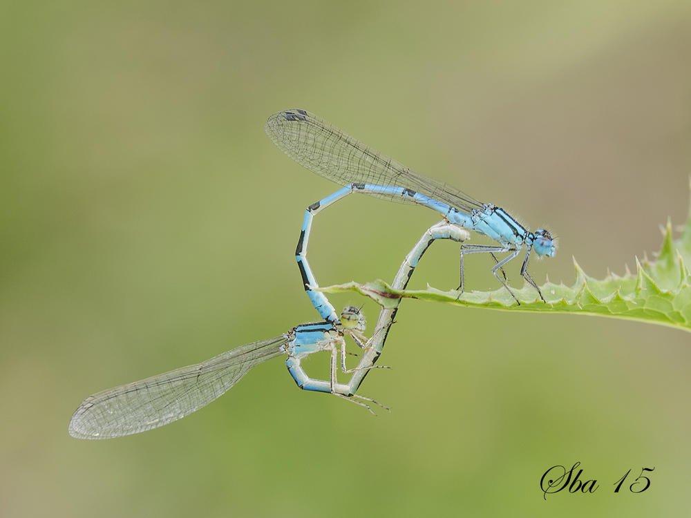 Delicadeza azul. (serafin Blanco Alonso)