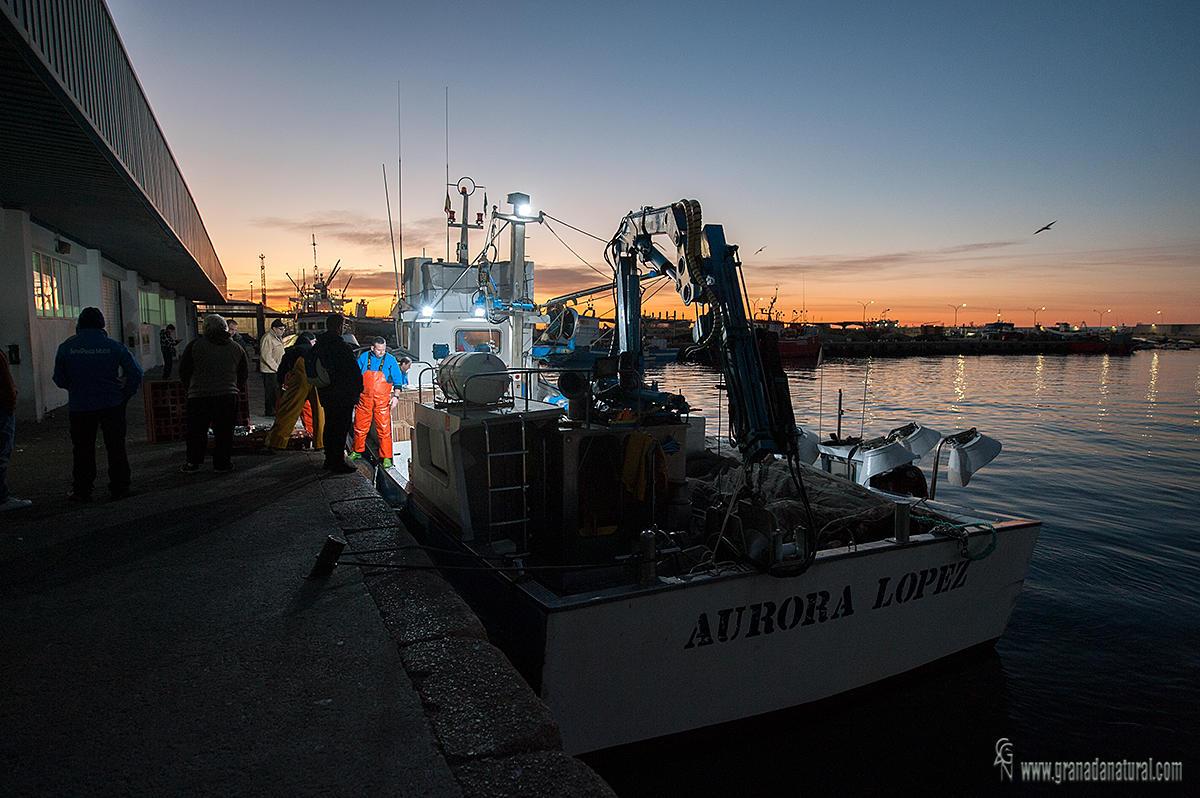 Descarga de pescado en la Lonja de Motril (Lucas Gutierrez Jiménez)