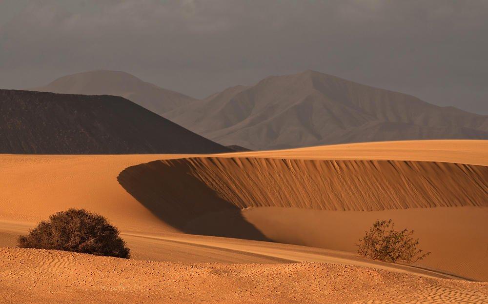Desierto de Corralejo (Salvador Solé Soriano)