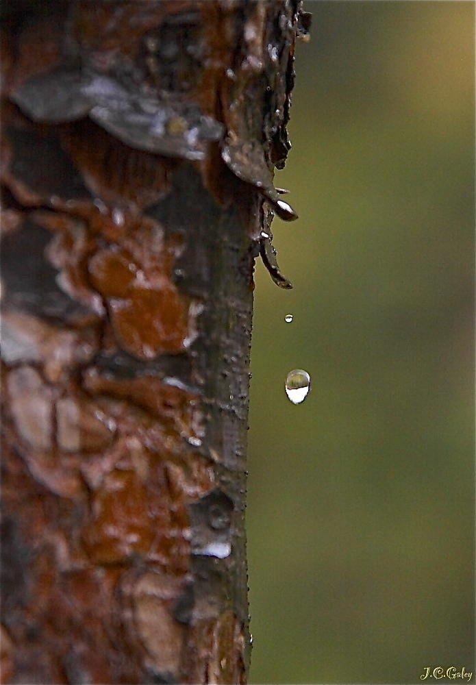 después de la lluvia (juan carlos galey arenas)