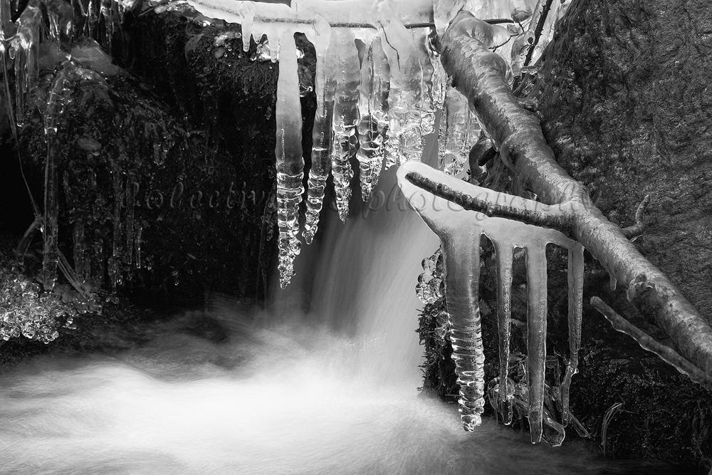 Detalle en blanco y negro (Txema Bacaicoa (Colectivo IS))