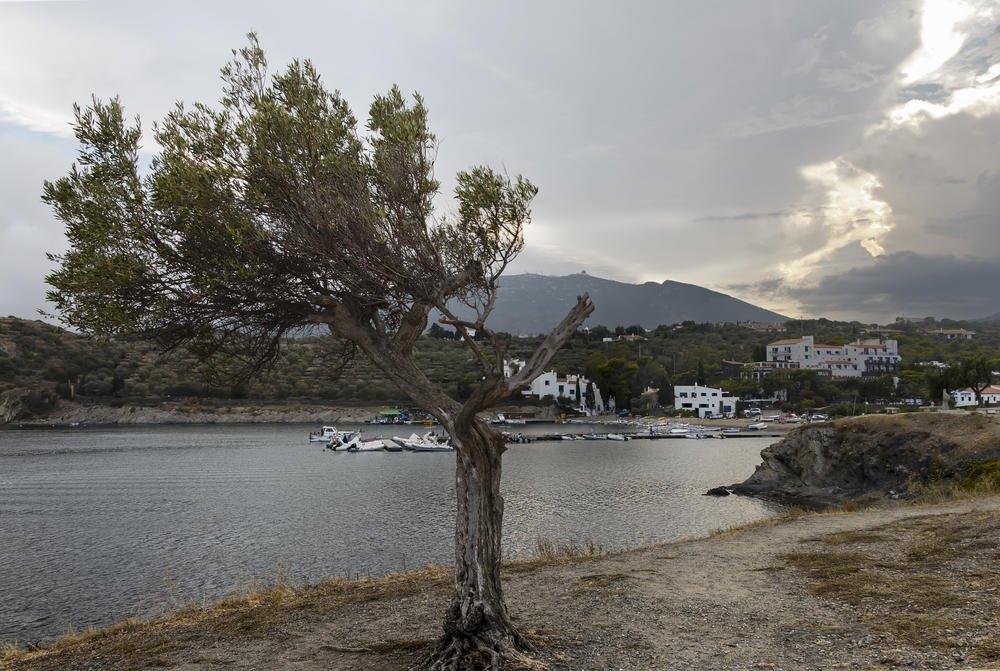 El árbol (Miguel Angel Vázquez Márquez)