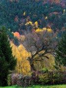 el árbol y los colores