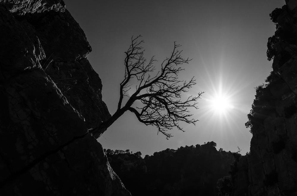 El arbusto colgado (Abrahan Manuel Francisco)