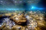 El arrecife Granadino ( Carchuna-Motril)