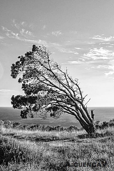 el azote del viento. (Antonio Cuenca.   vaya)