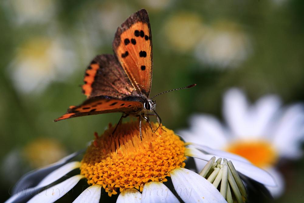 El baile de la mariposa (Txema Bacaicoa (Colectivo IS))