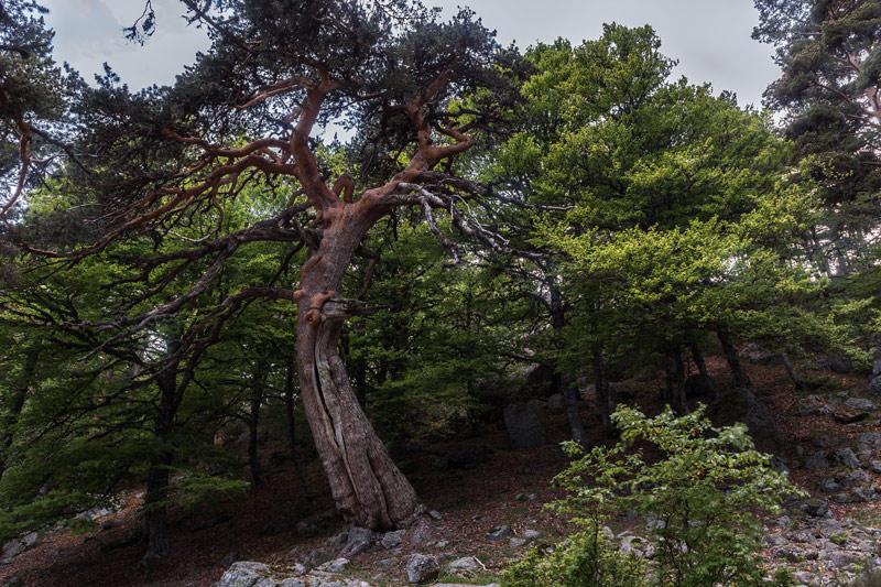 el baile del árbol (Jose Luis Rubio Perez)