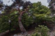 el baile del árbol