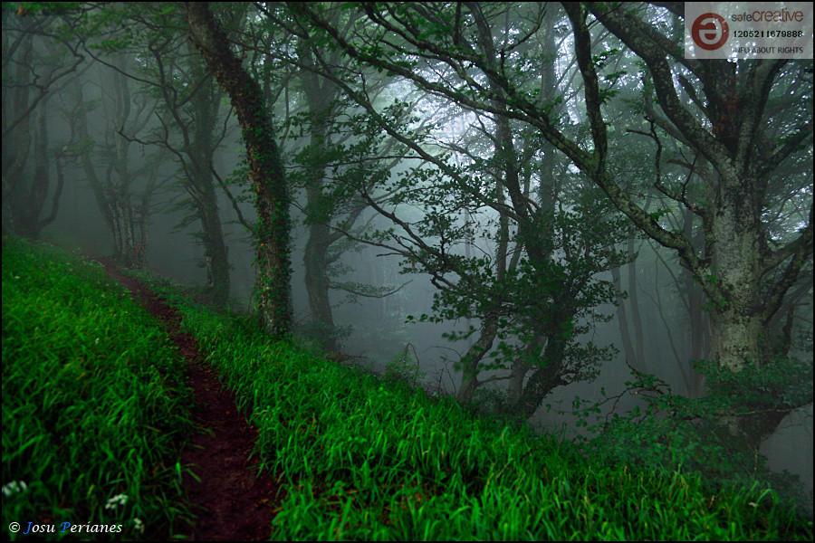 El Bosque animado (Josu Perianes)