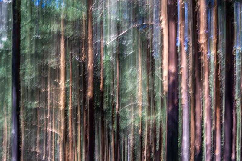 el bosque animado (Jose Luis Rubio Perez)