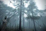 El bosque de los locos