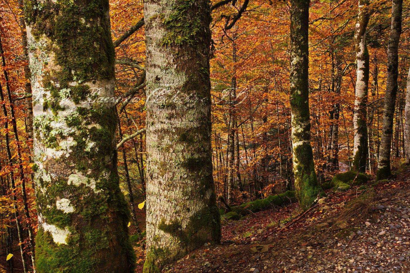 El bosque enrejado (Txema Bacaicoa (Colectivo IS))