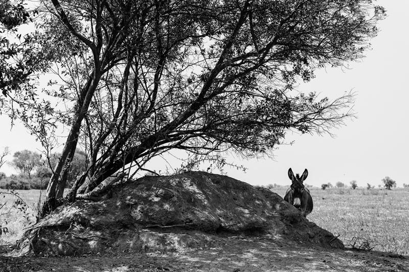el burro que mira (Jose Luis Rubio Perez)