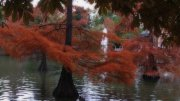 El color de otoño.