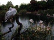 El Lago de los Pelicanos