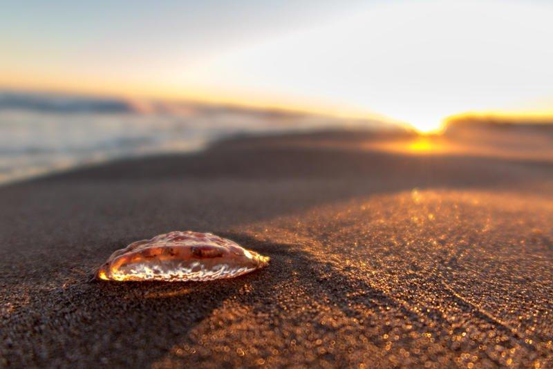 el ocaso de la medusa (Jose Luis Rubio Perez)