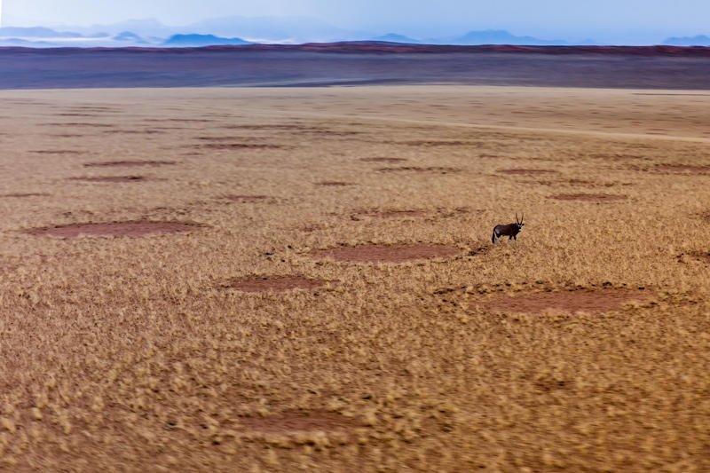 el oryx y las hadas (Jose Luis Rubio Perez)