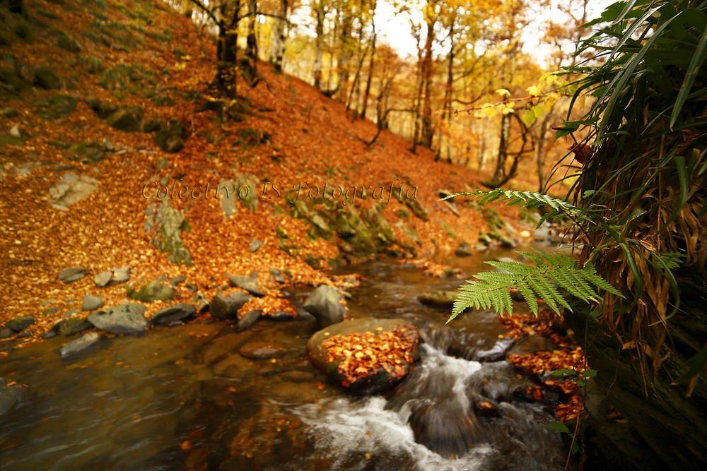 El otoño (Txema Bacaicoa (Colectivo IS))