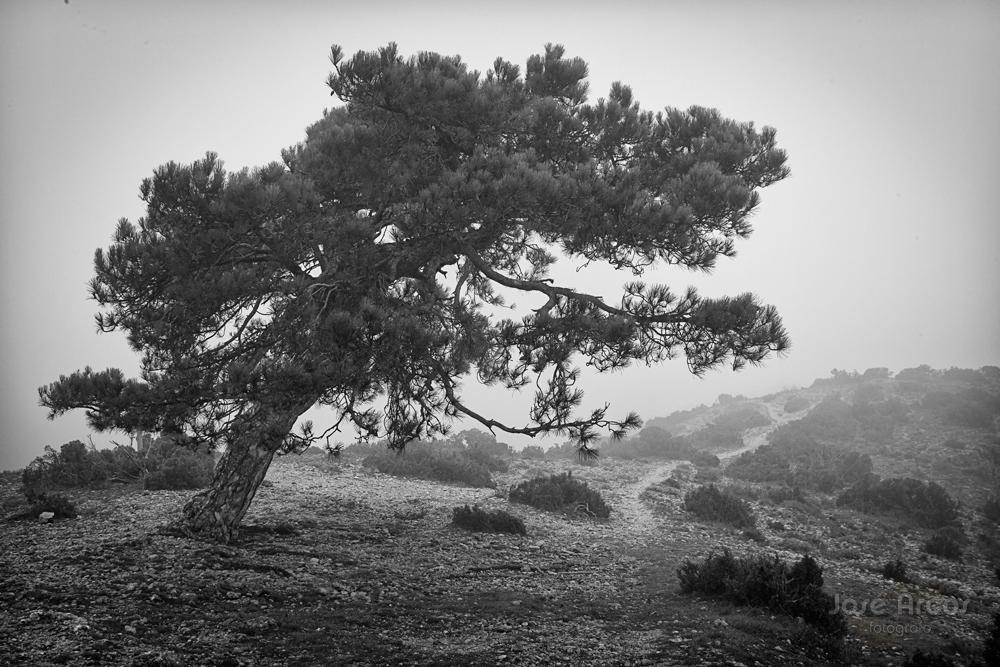El Pi de Cugat (Montsant) (José Arcos Aguilar)