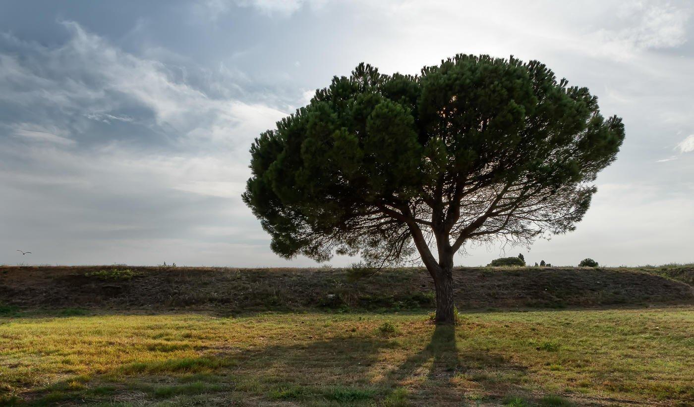 El pino solitario (Miguel Angel Vázquez Márquez)