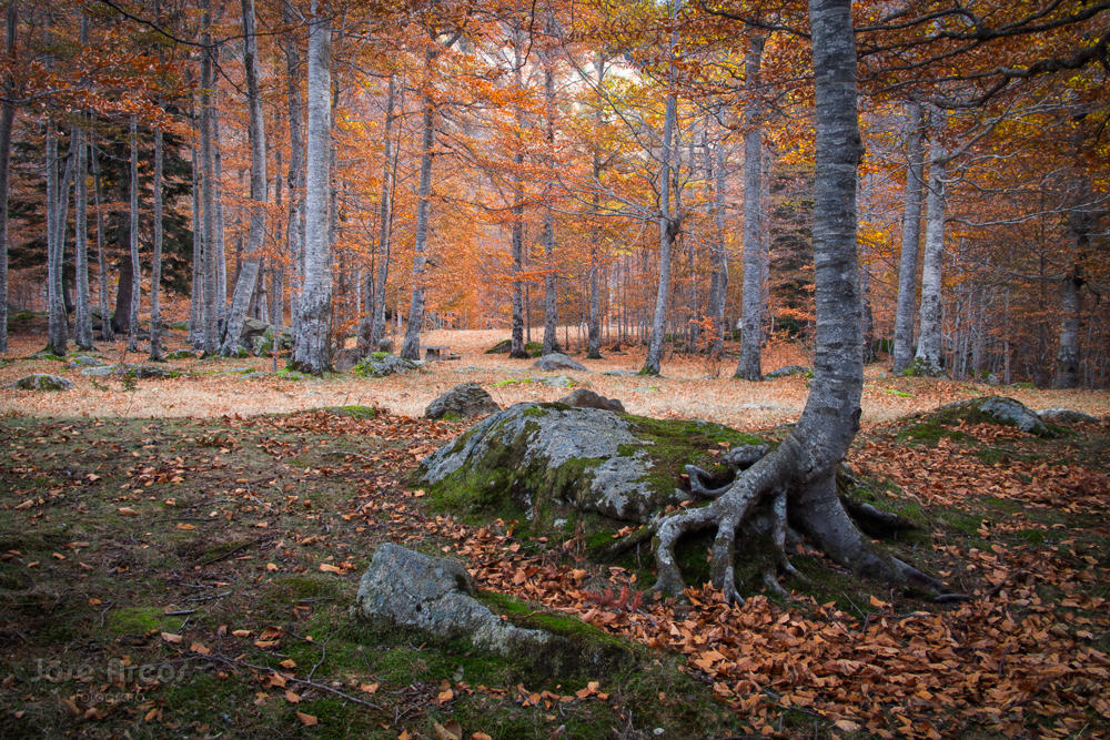 El placer del otoño (José Arcos Aguilar)