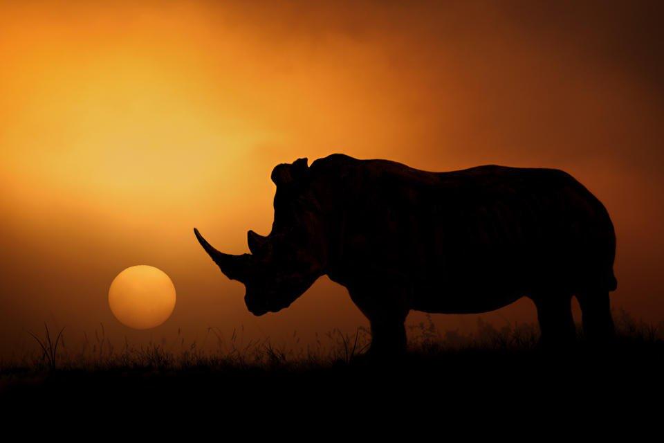 El Rinoceronte (Mario Moreno)