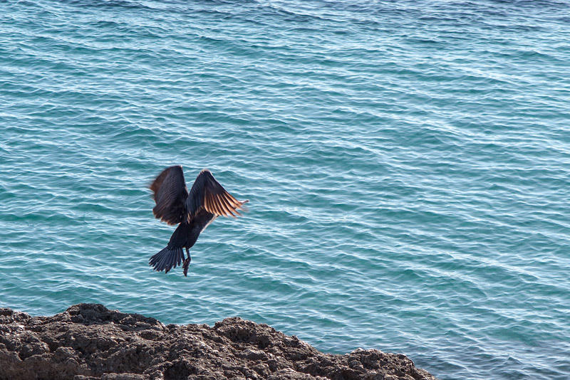 el salto del cormorán (Jose Luis Rubio Perez)