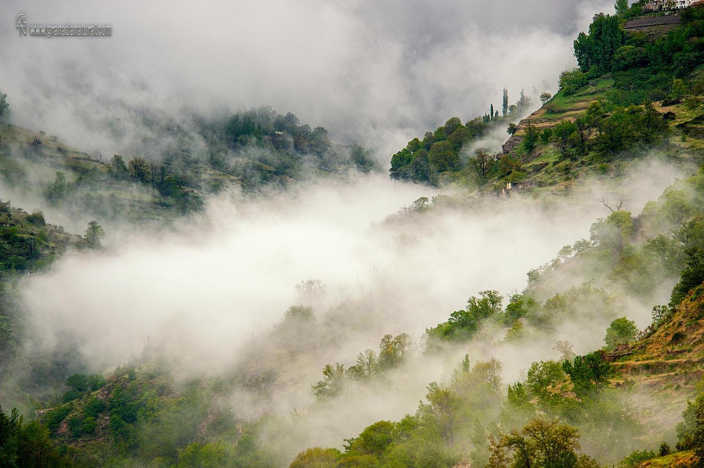 El valle del Poqueira  entre  nieblas (Lucas Gutierrez Jiménez)